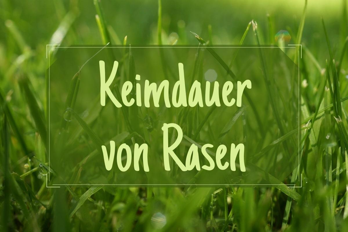 Keimdauer Rasen - Titel