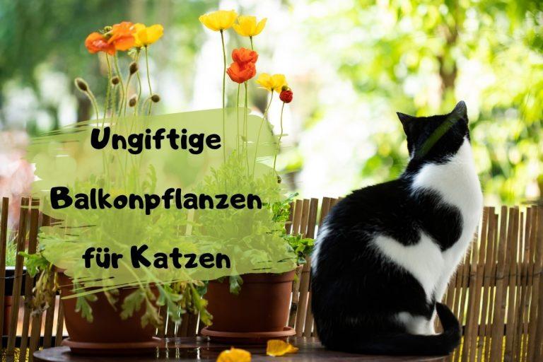 40 ungiftige Balkonpflanzen für Katzen - Titelbild