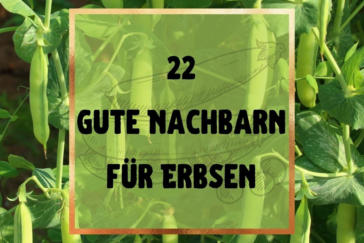 22 gute Nachbarn von Erbsen: was verträgt sich? - Titelbild