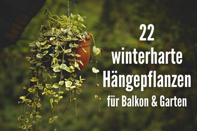 24 winterharte Hängepflanzen Balkon & Garten - Titelbild