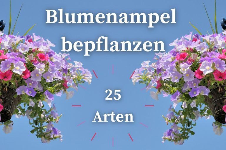 Blumenampel bepflanzen 25 geeignete Pflanzenarten - Titelbild