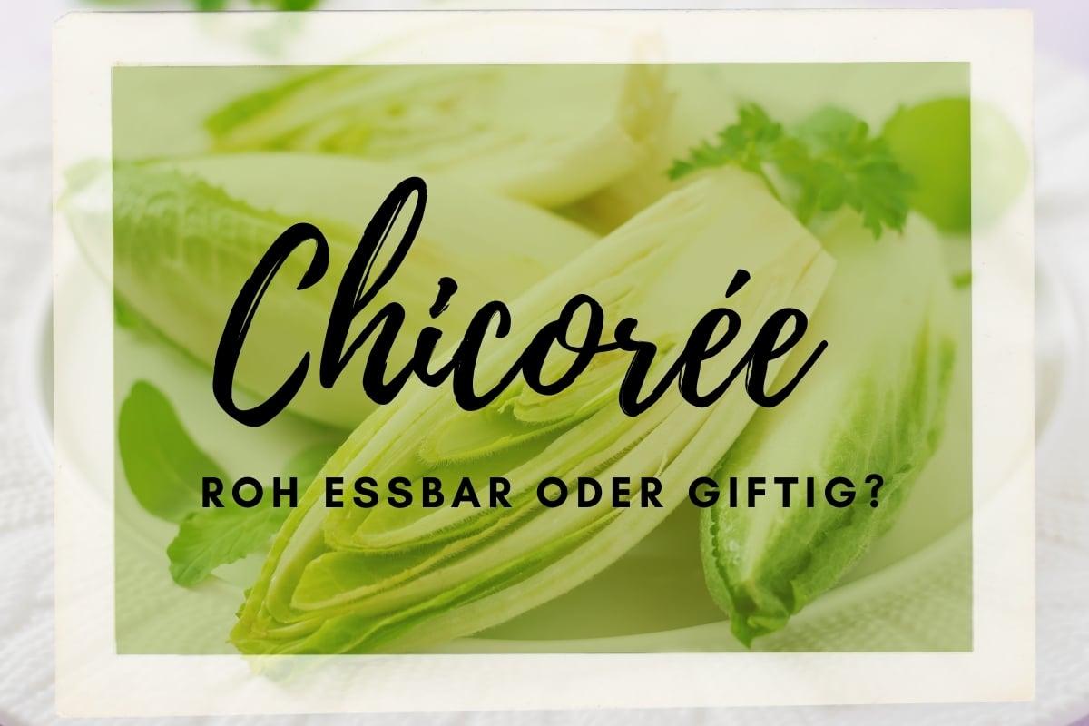 Darf man Chicorée roh essen? | Essbar oder giftig? - Titelbild