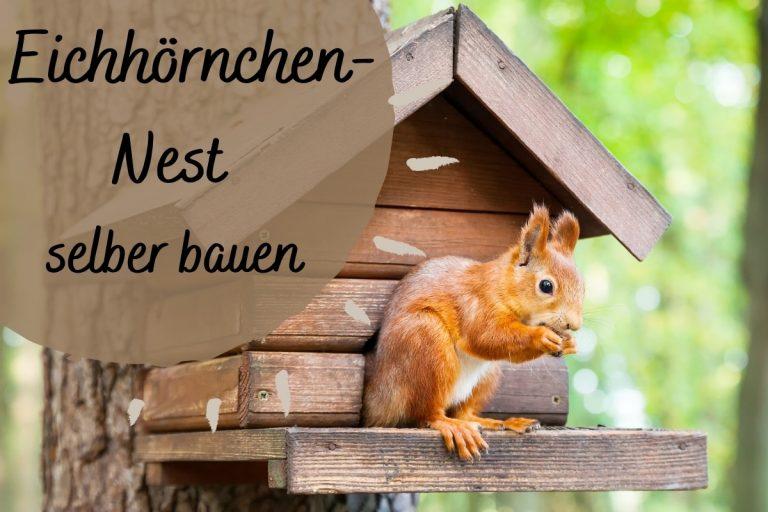 Eichhörnchen-Nest in 6 Schritten selber bauen - Titelbild
