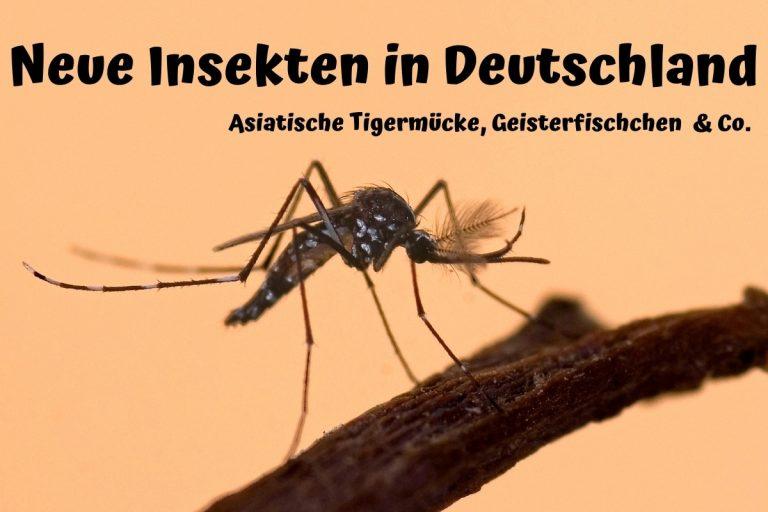 Neue Insekten in Deutschland: Stand 2020 - Titelbild