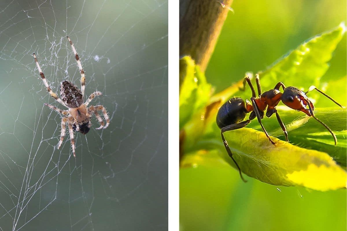 Insekt vs. Spinne