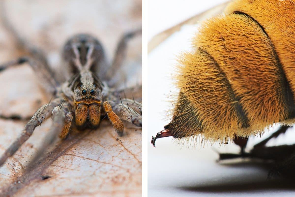 Spinne vs. Insekt