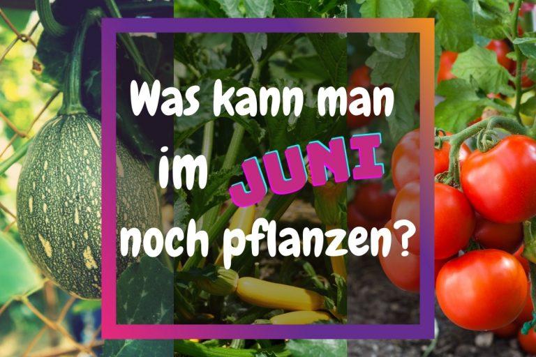 Was kann man im Juni noch pflanzen - Titelbild