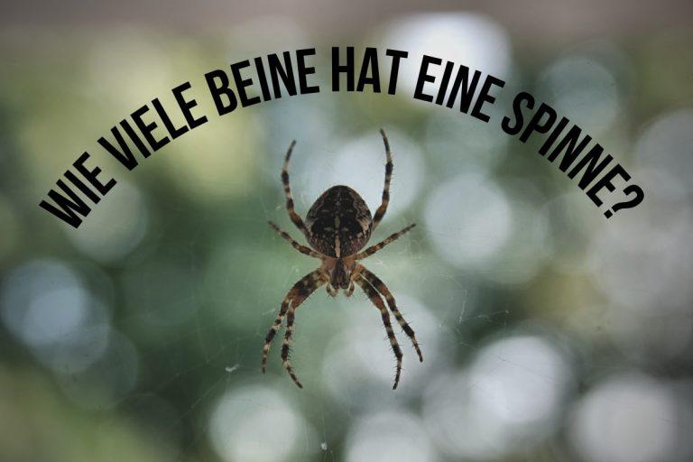 Wie viele Beine hat eine Spinne? - Titelbild