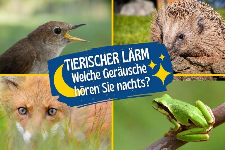 Tierische Geräusche in der Nacht - Nachtigall, Fuchs, Igel und Laubfrosch