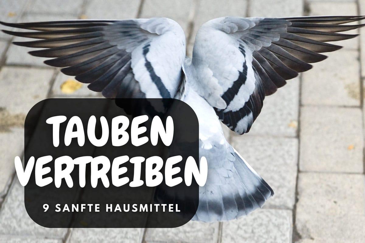 Tauben mit Hausmitteln vertreiben