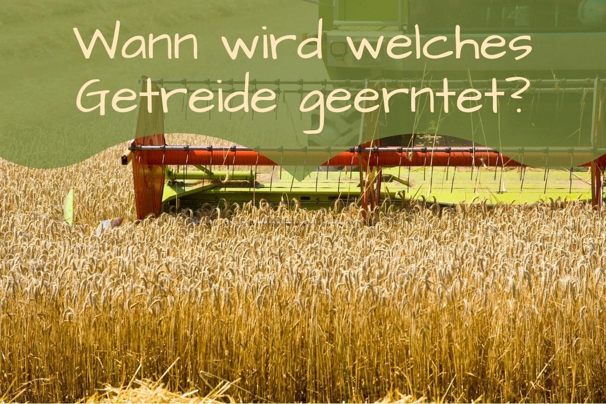 Getreide Ernte - Titel