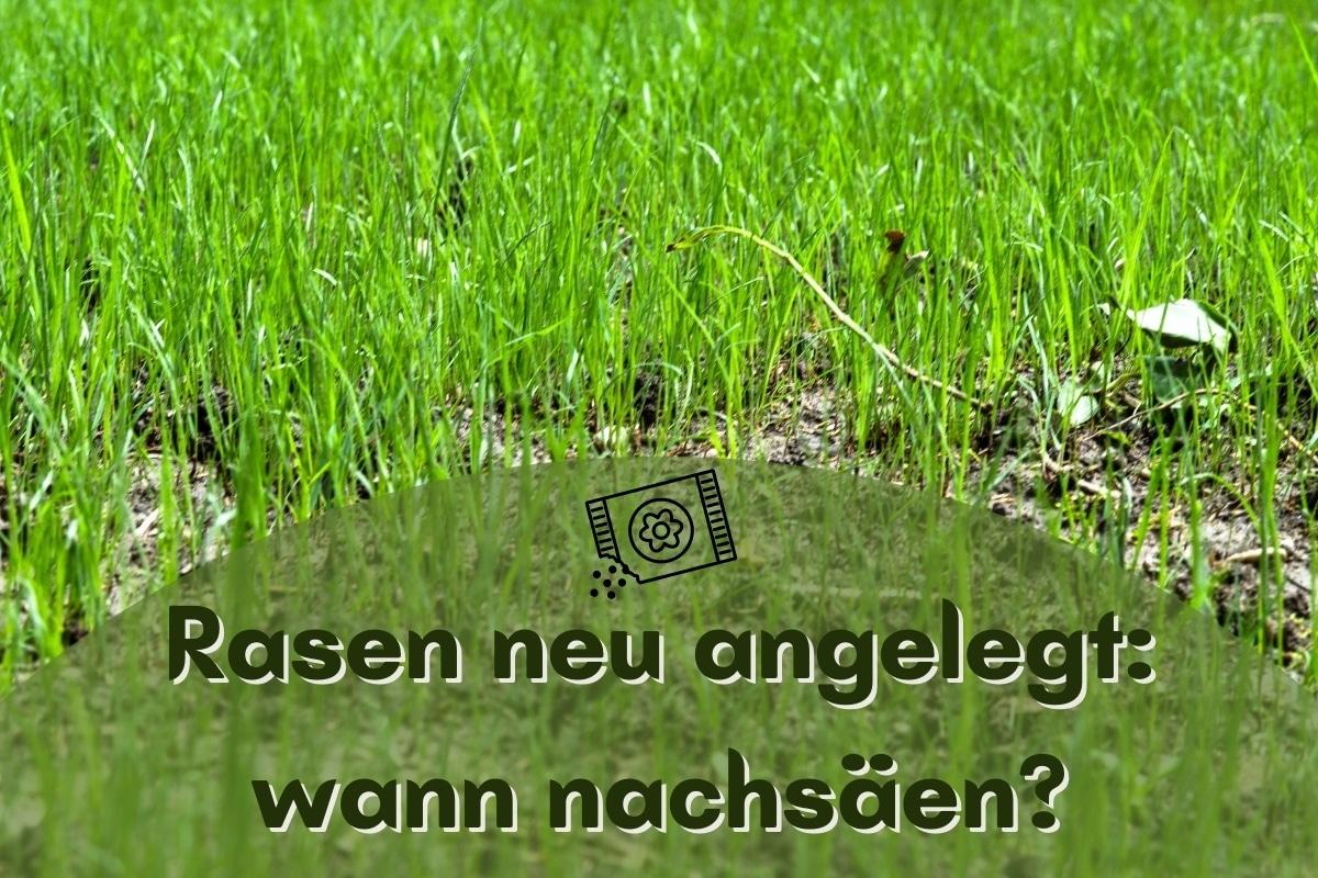 Rasen neu angelegt und nachsäen - Titel