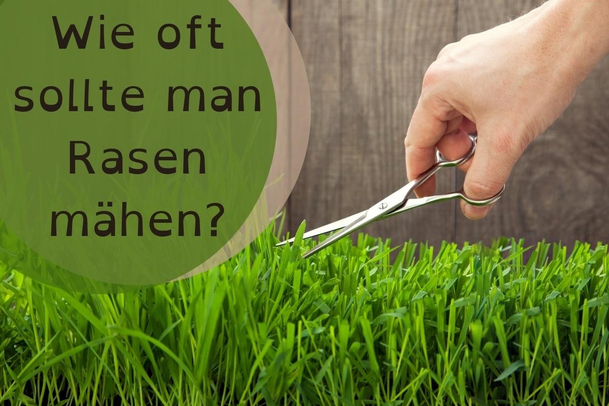 Wie oft Rasen mähen - Titel
