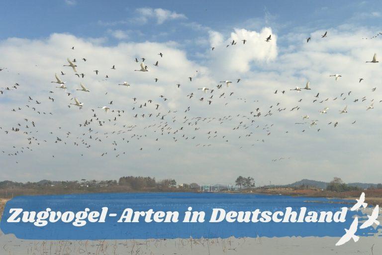 Zugvogel-Arten in Deutschland