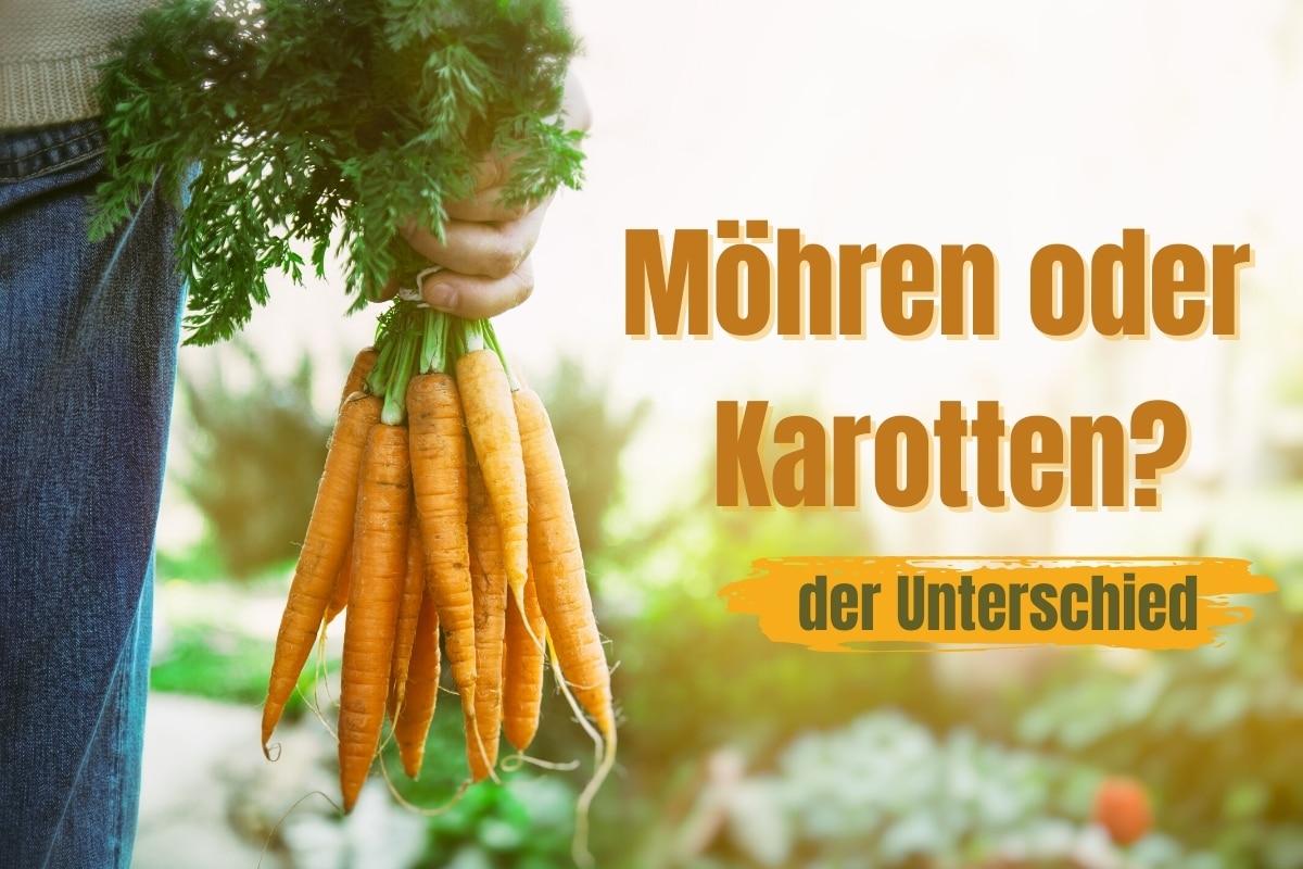 Was ist der Unterschied zwischen Möhren und Karotten?