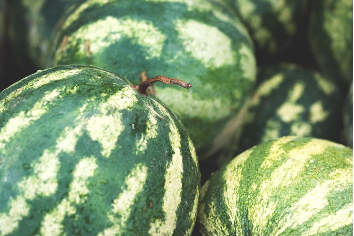 reife Wassermelonen mit getrocknetem Stiel