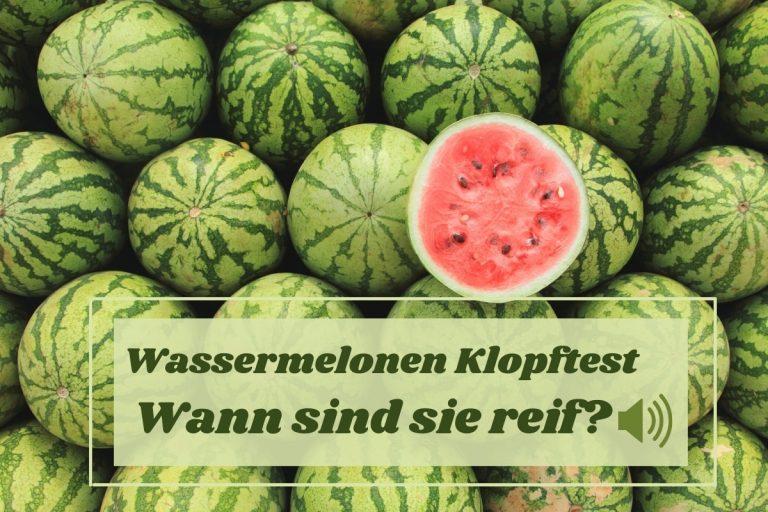 Klopftest bei reifen Wassermelonen
