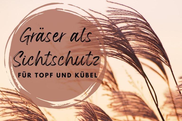 27 Gräser als Sichtschutz für Topf und Kübel - Titelbild