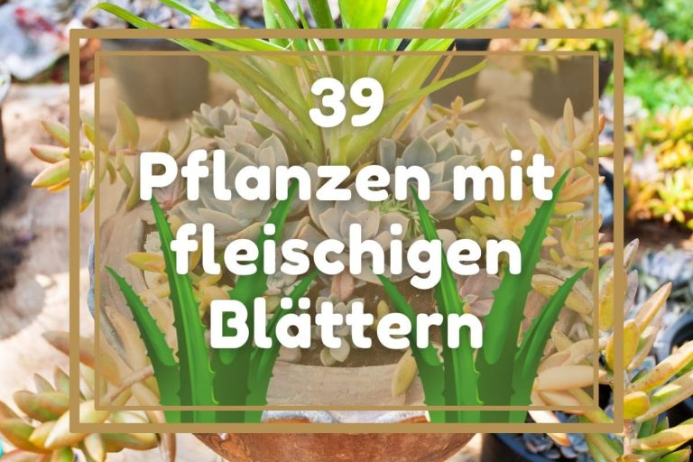 39 Pflanzen mit fleischigen Blättern von A-Z - Titelbild