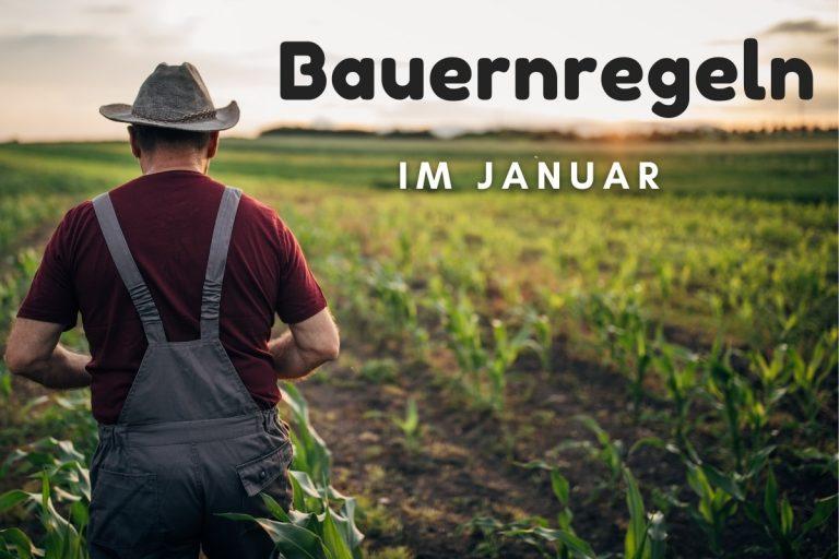 Bauernregeln im Januar - Titelbild