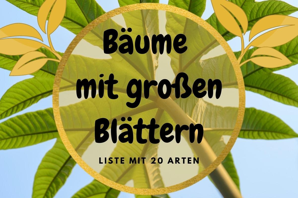 Baum mit großen Blättern - Titelbild