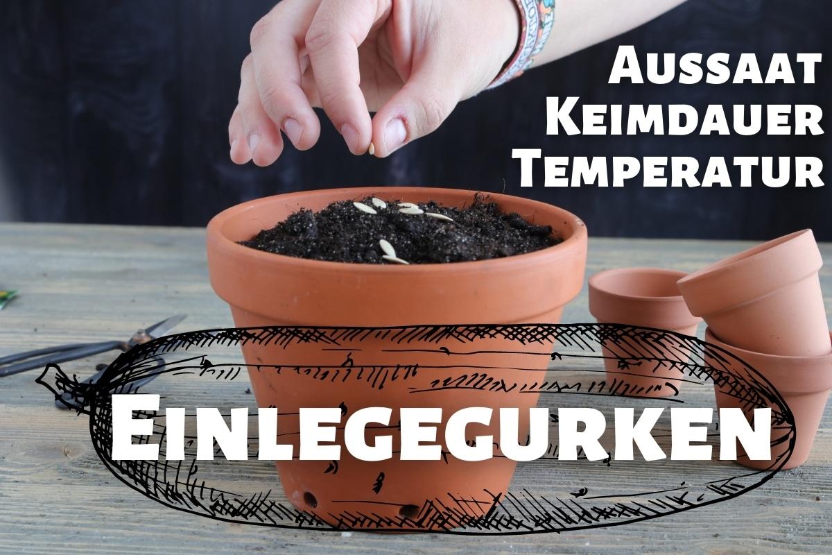 Einlegegurken Aussaat Keimdauer, Temperatur & Co - Titelbild