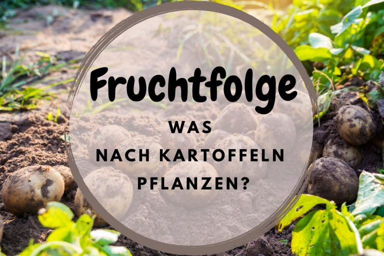 Fruchtfolge: was nach Kartoffeln pflanzen? - Titelbild