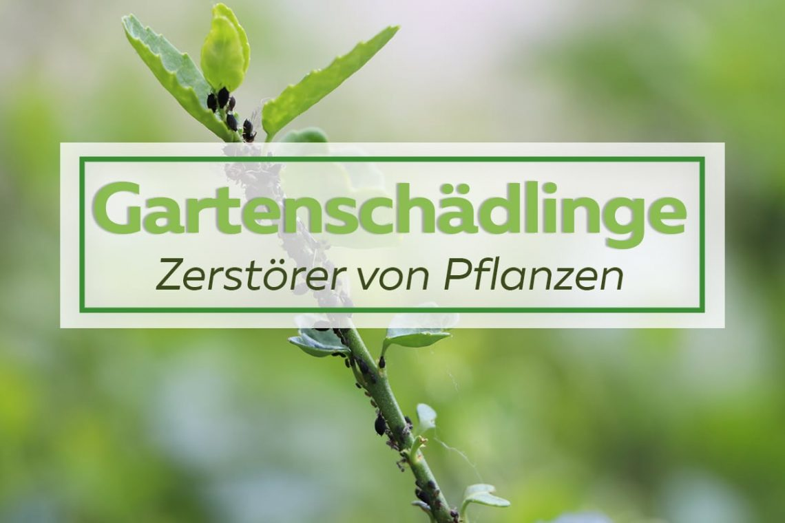Gartenschädlinge