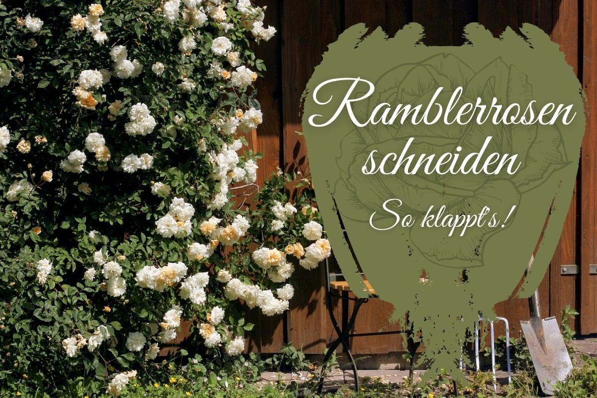 Ramblerrose schneiden: so klappt's - Titelbild