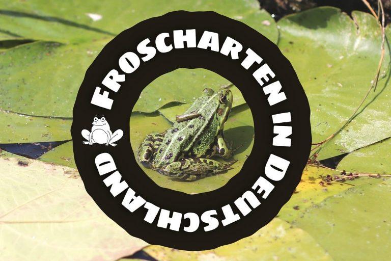 Froscharten in Deutschland - Frosch auf Seerosenblatt