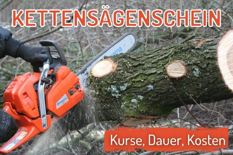 Kettensägenschein - Kettensäge schneidet Baum