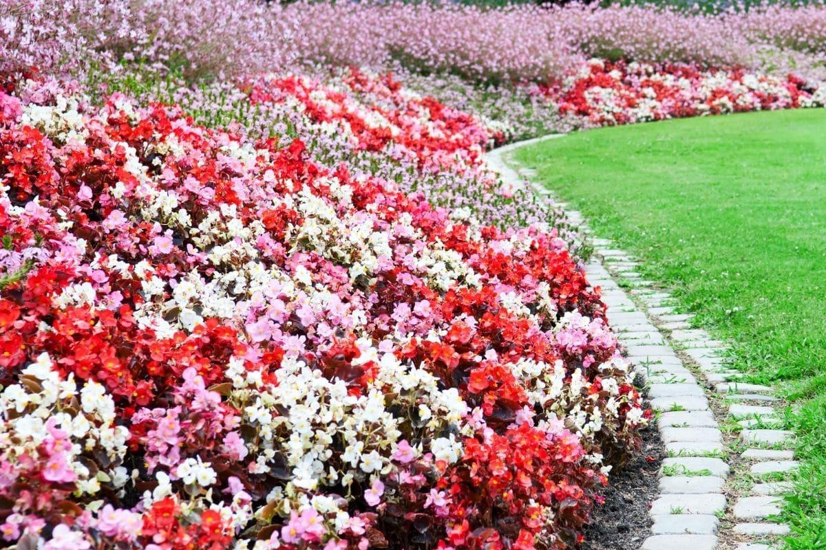 romantisches Blumenbeet