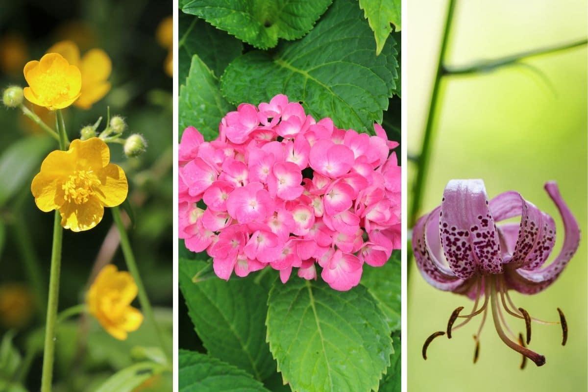 romantische Bluem für Gartenromantik