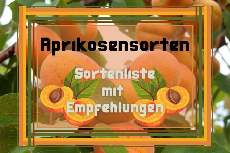 20 Aprikosensorten: Sortenliste mit Empfehlungen - Titelbild