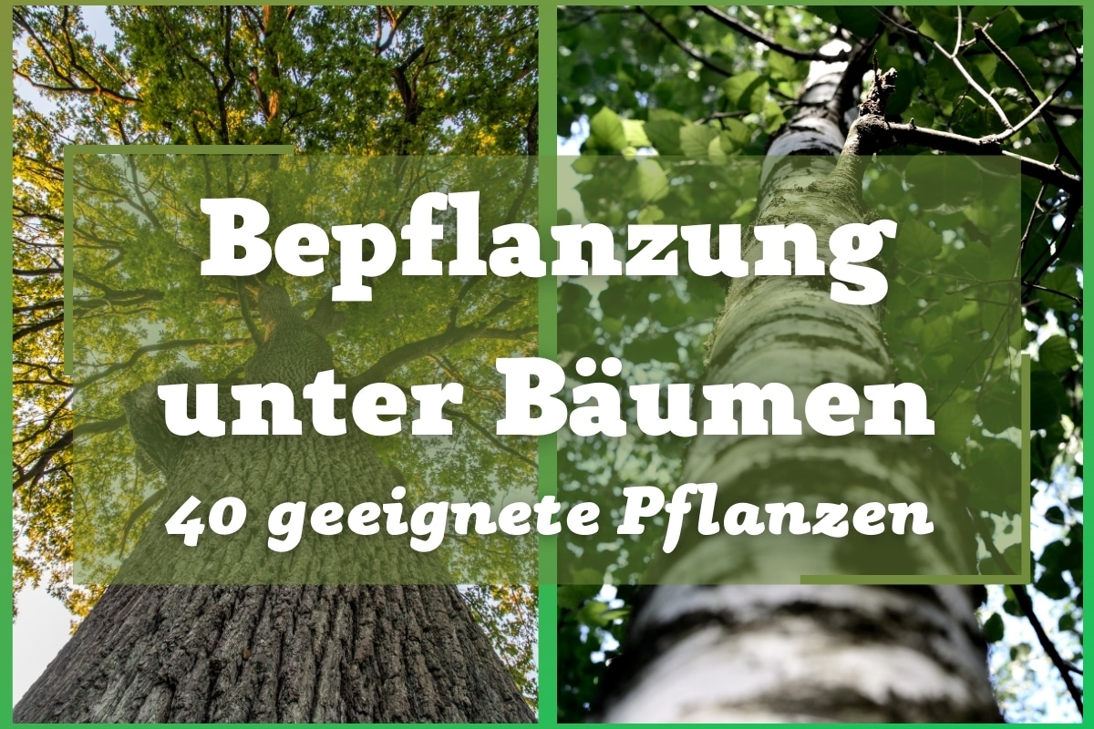 Bepflanzung unter Bäumen 40 geeignete Pflanzen - Titelbild