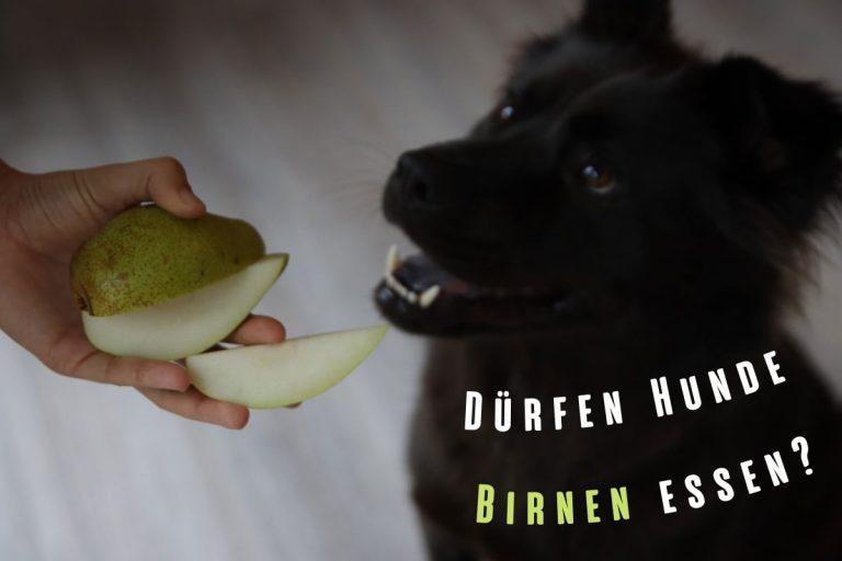 Dürfen Hunde Birnen essen? Titelbild