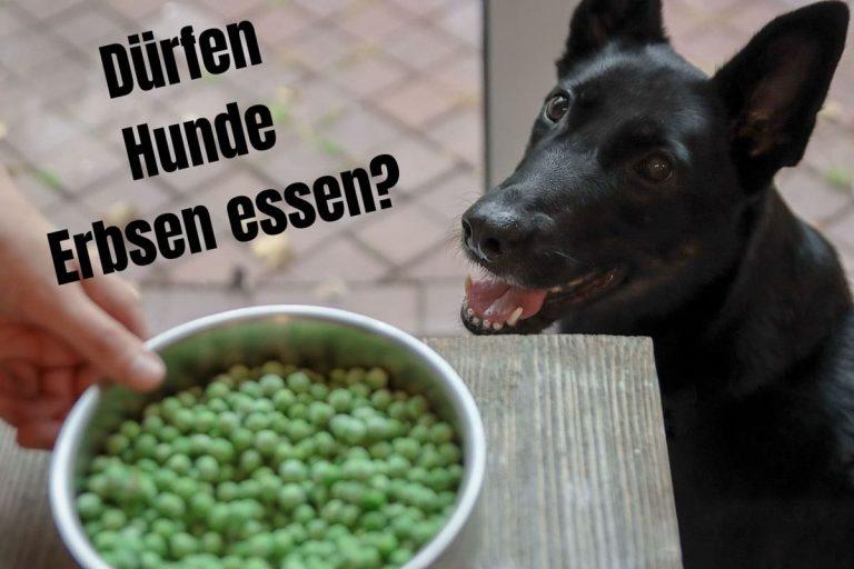 Dürfen Hunde Erbsen essen? Titelbild