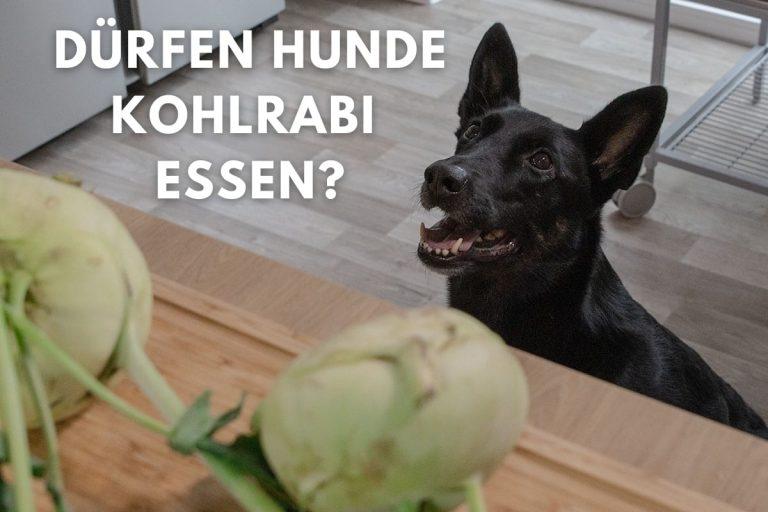 Dürfen Hunde Kohlrabi essen? Titelbild