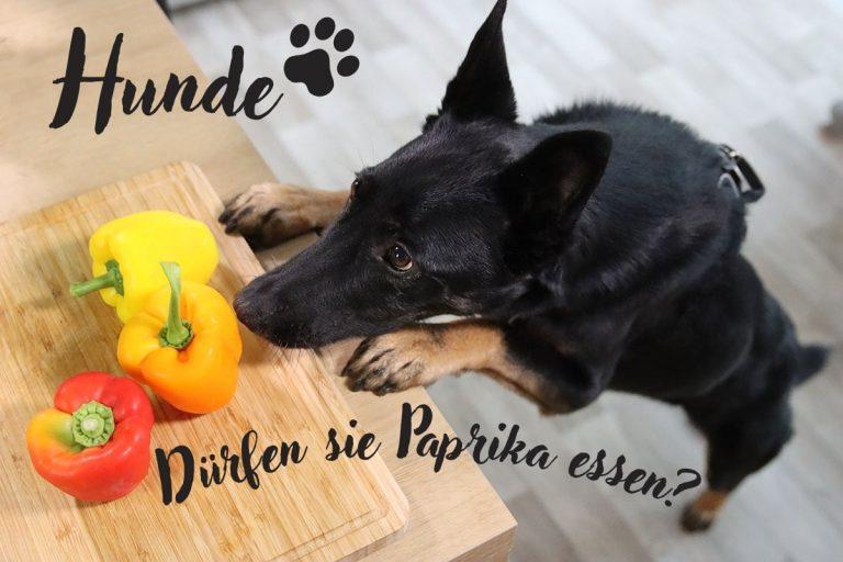 Dürfen Hunde Paprika essen? Titelbild