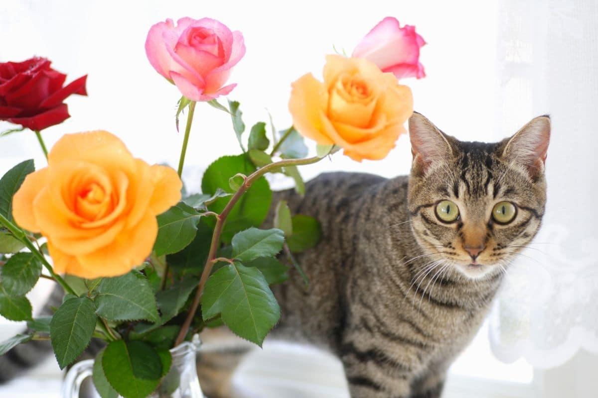 Katze & Rosen