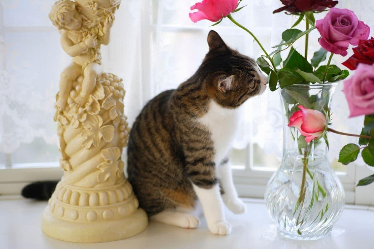 Katze & Rosen giftig?