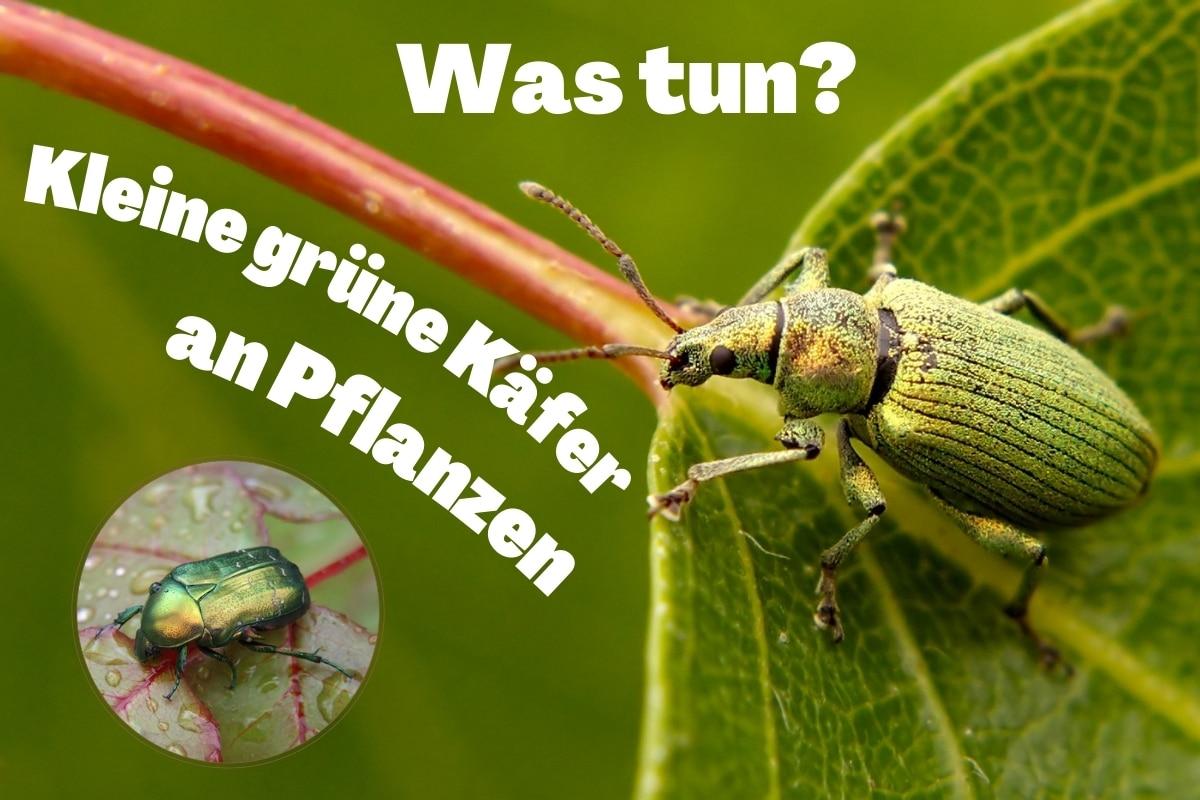 Kleine grüne Tiere/Käfer an Pflanzen: was tun? Titelbild