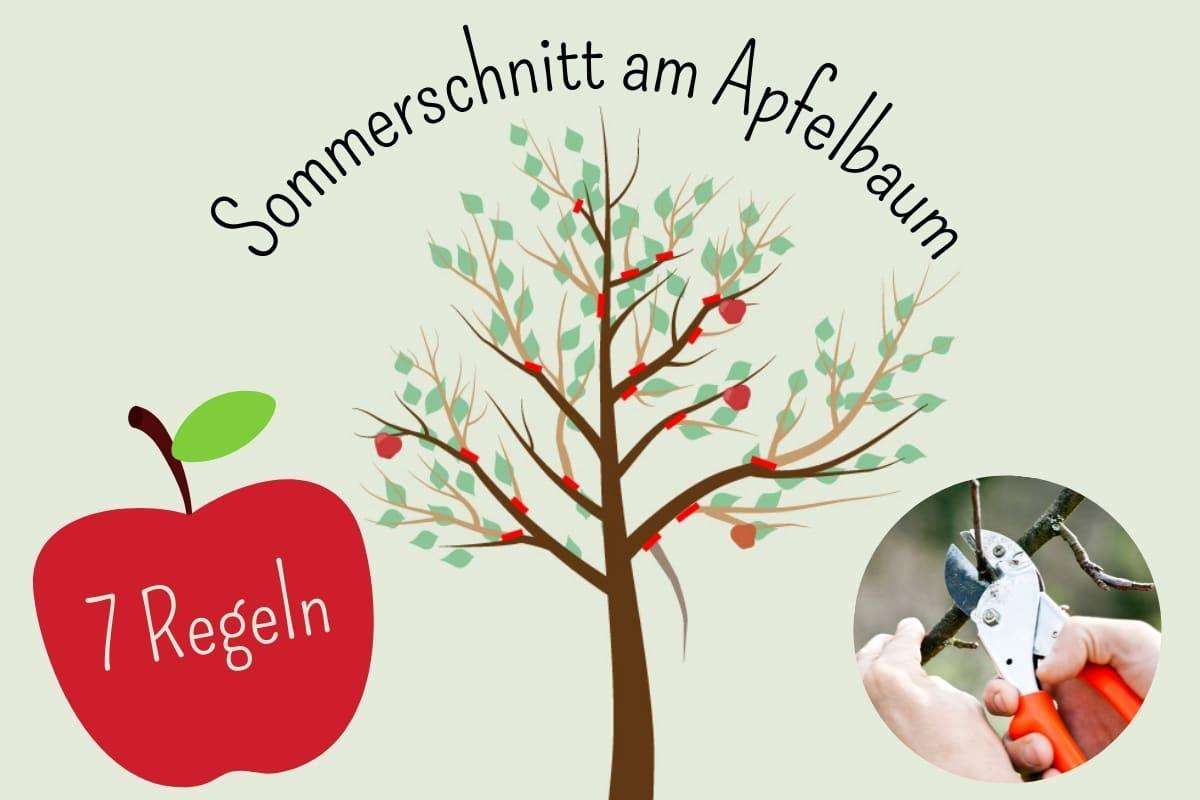 Sommerschnitt am Apfelbaum: die 7 Regeln - Titelbild